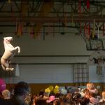 DSC 8695 150x150 - Pust v Cerknici 2016 - Galerija dogodkov